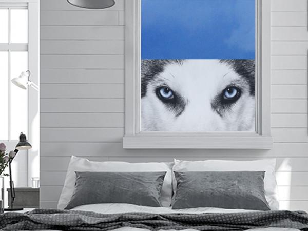 Sichtschutzfolie Husky Hund Tier Augen