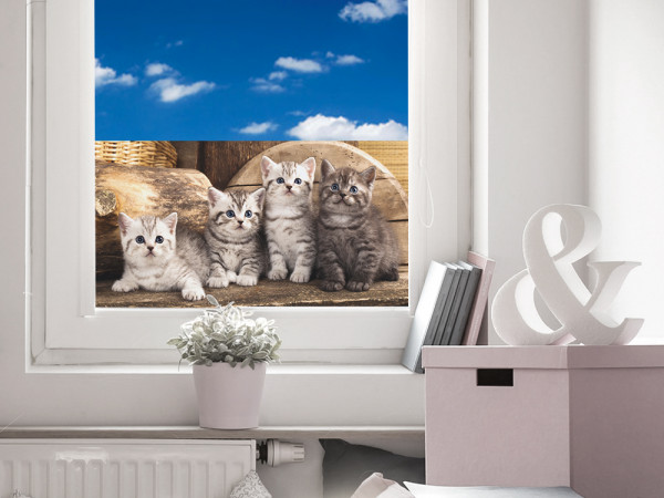 Sichtschutz Fensterfolie Folie Farbig für Kinderzimmer Katzenkinder