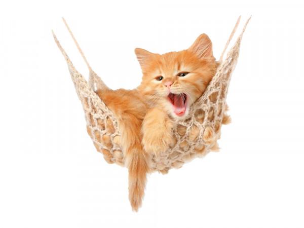 Wandsticker Katze in Hängematte