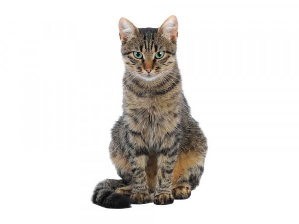 Wandsticker Wandtattoo Wandaufkleber Kinderzimmer Katze Stuben Tiger