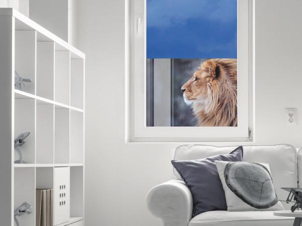 Sichtschutzfolie Löwe Afrika Tier