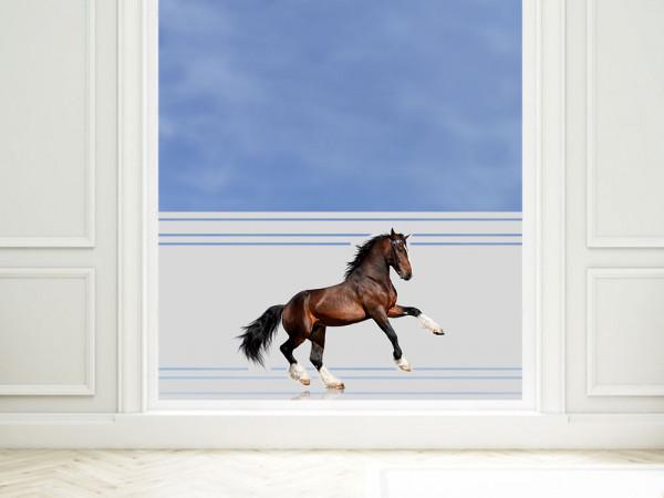 Sichtschutzfolie farbig Pferd steigt