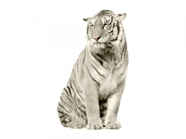 Wandsticker Wandsticker Wandtattoo Schneetiger Schnee Tiger sitzend
