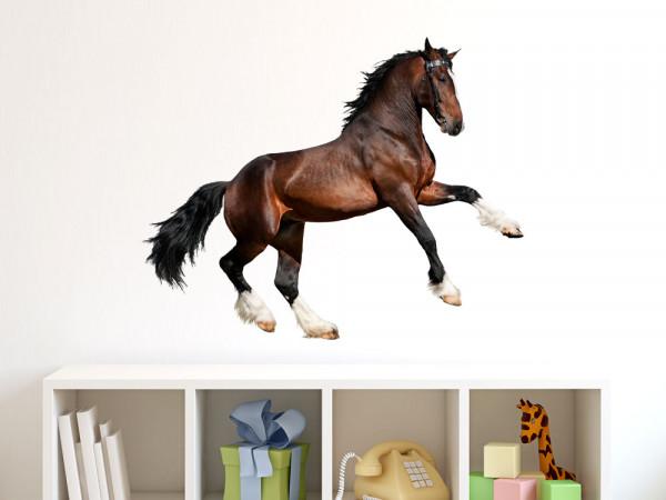 Wandsticker Tiere Pferd Dressur Hengst Mädchen