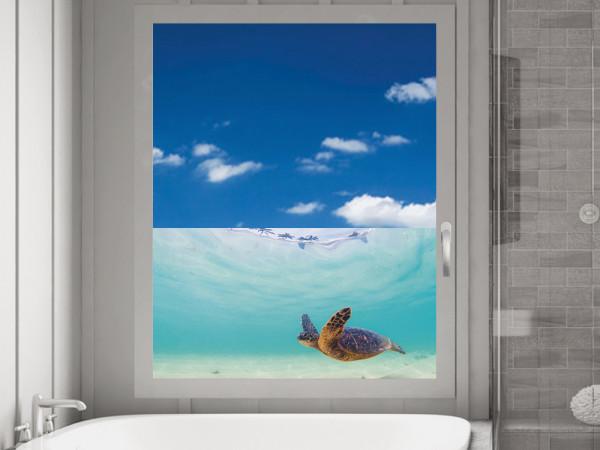 Sichtschutzfolie Schildkröte Wasser