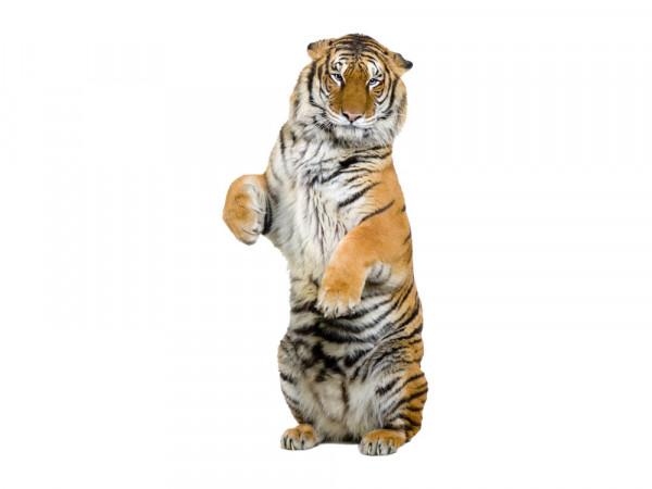 Wandsticker Stehender Tiger für Ihr Wohnzimmer