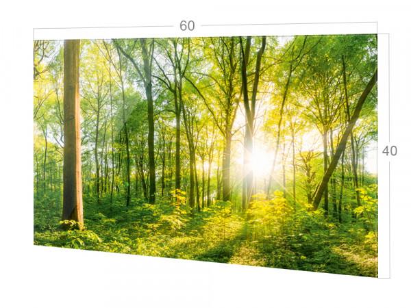 Spritzschutz Küche Wald, Lichtung, Bäume in Grün