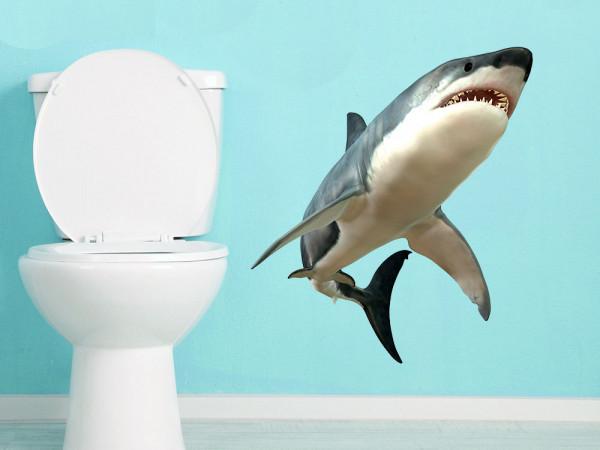 Wandsticker Hai Haifisch Meerestier