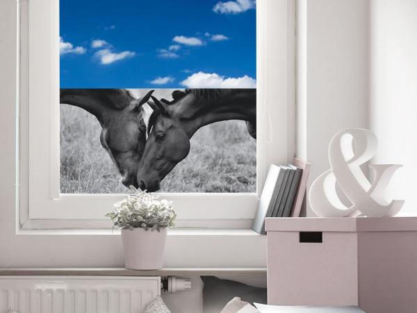 Sichtschutzfolie Pferde Pferdeköpfe