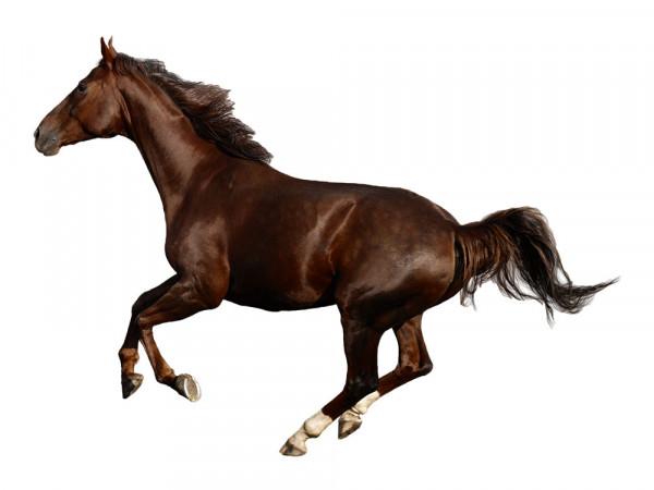 Wandtattoo Tiere Pferd Galopp Kinderzimmer Mädchen