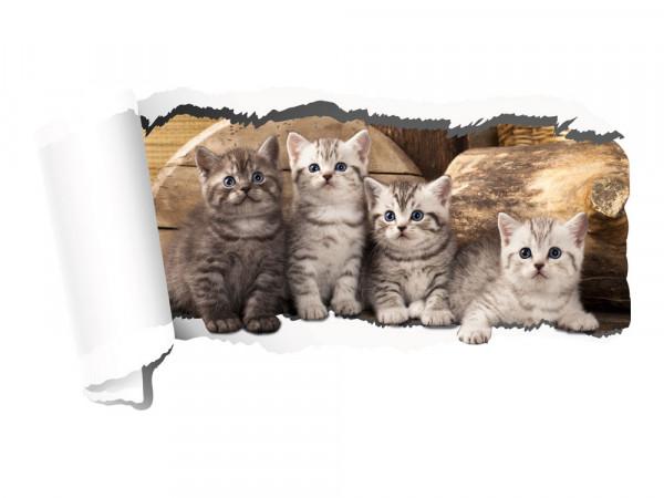 Wandtattoo Katzen
